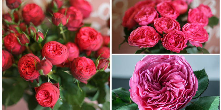 Акция на пионовидную розу
